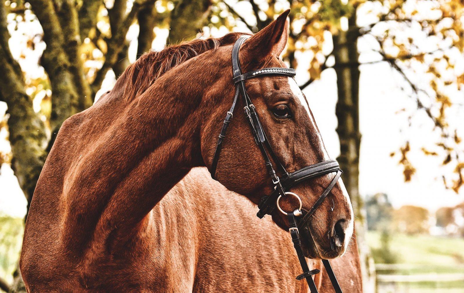 Westernsattel für Pferde mit geradem Rücken