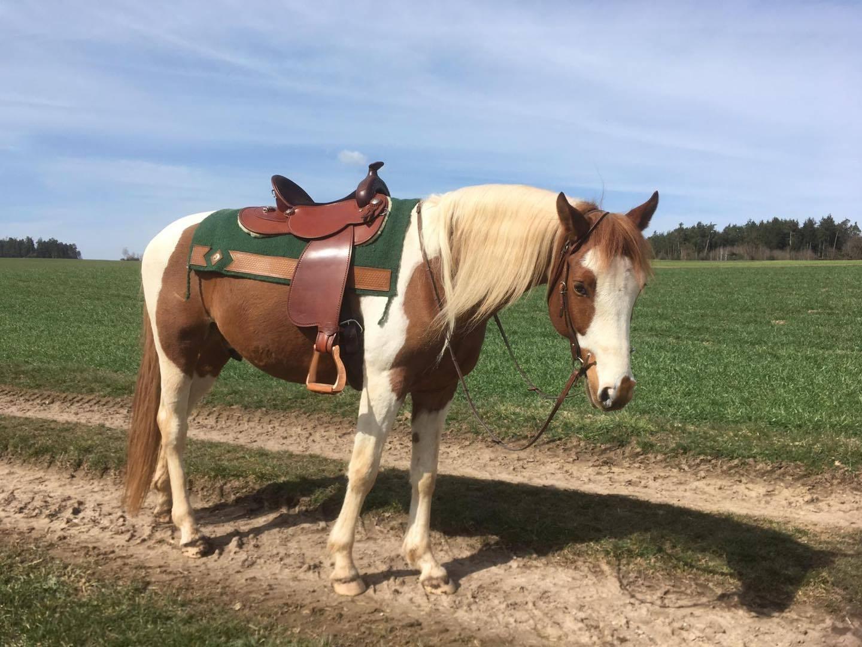 Welche Westernsattel-Größe ist die richtige für mein Pferd und mich?